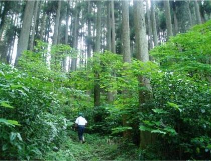 高森町/南郷檜エキスを利用したリップづくり体験コース